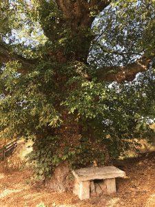 Kraftvoller Baum bei Feldengel